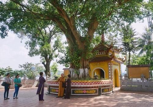 cây bồ đề chùa trấn quốc